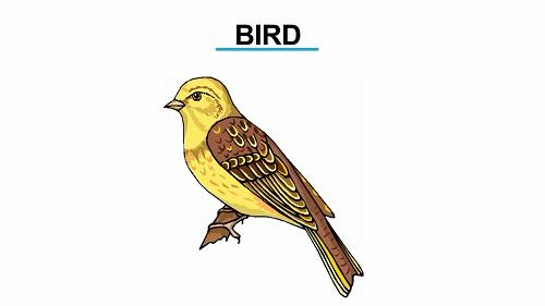 Bird 1451472985994