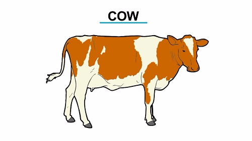 Cow 1451473004553
