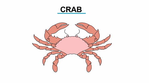 Crab 1451461149343