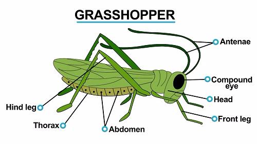 Grasshopper 1451461167585