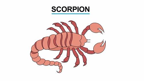 Scorpion 1451461223224