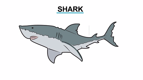 Shark 1451472939587