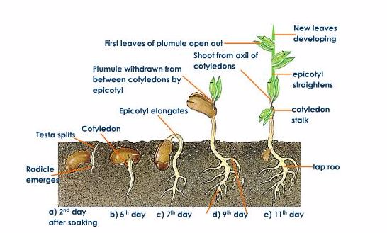 The concept of seed Germination