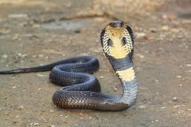 Snake 1451473170788