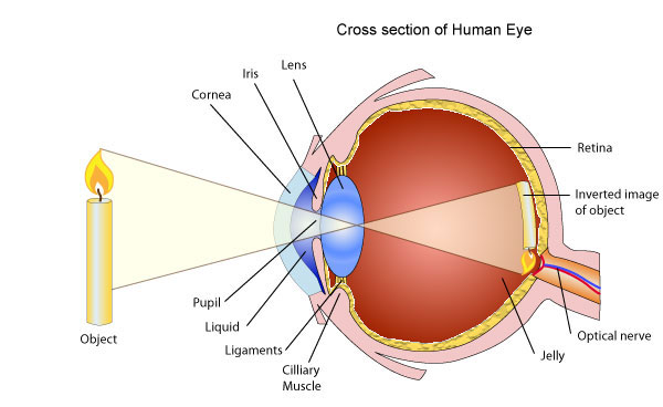 Eye 1456069578846