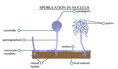 Sporulation 1451539115288