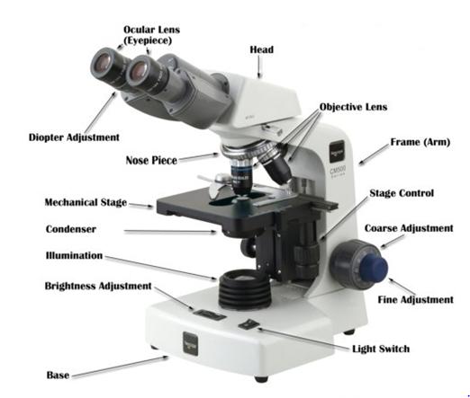 Microscope 1440507960293