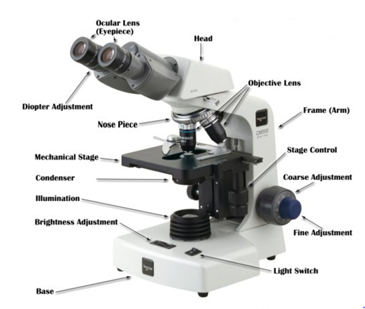 Microscope 1440510462713