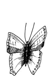 Butterfly 1439210136623