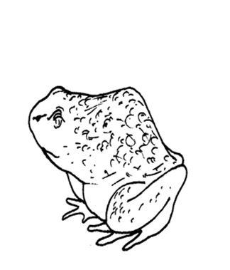 Frog 1439210342787